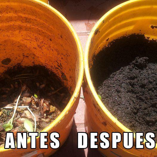 Residuos organicos convertidos en compost. Antes y Despues